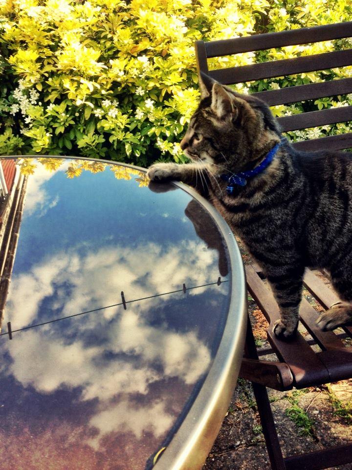Outside cat clouds garden