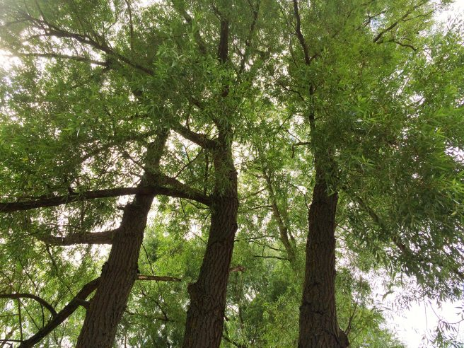 Trees sky contrast
