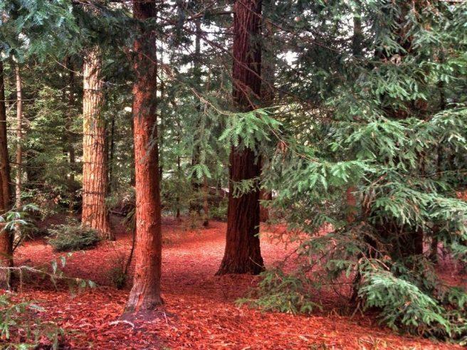 Center Parcs forest