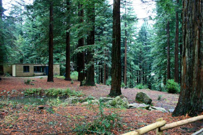 Longleat Center Parcs forest
