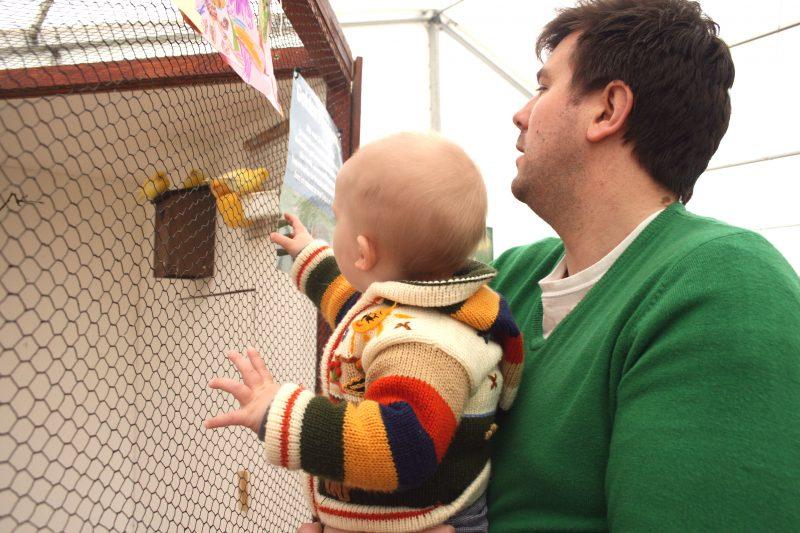 Looking at the Birds at Becketts Farm
