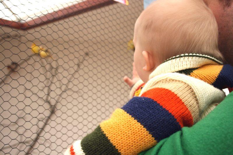 Baby looking at Baby Birds