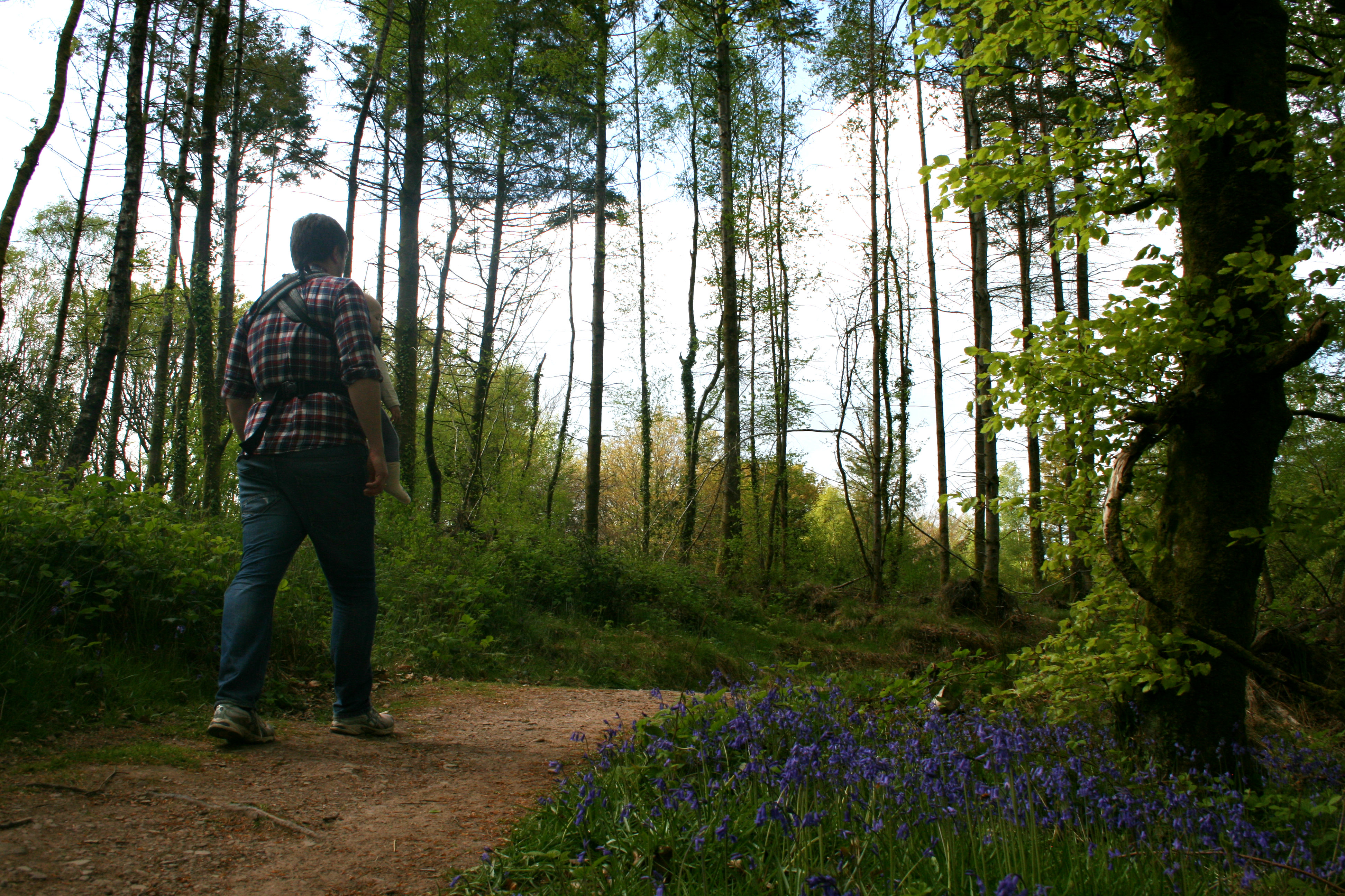 Nature Walk at Bluestone Wales