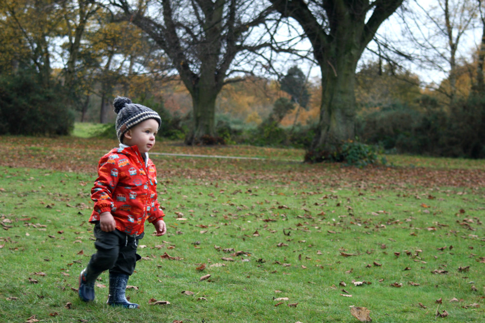 Pickle walking outside in Sutton Park with woolly hat on