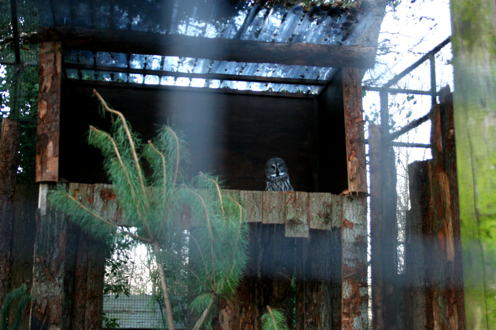 Owl at Drayton Manor