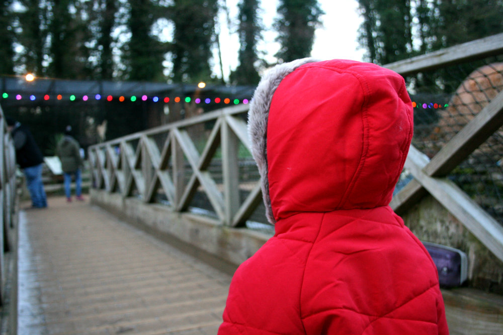 Pickle on a bridge on the Dino Trail