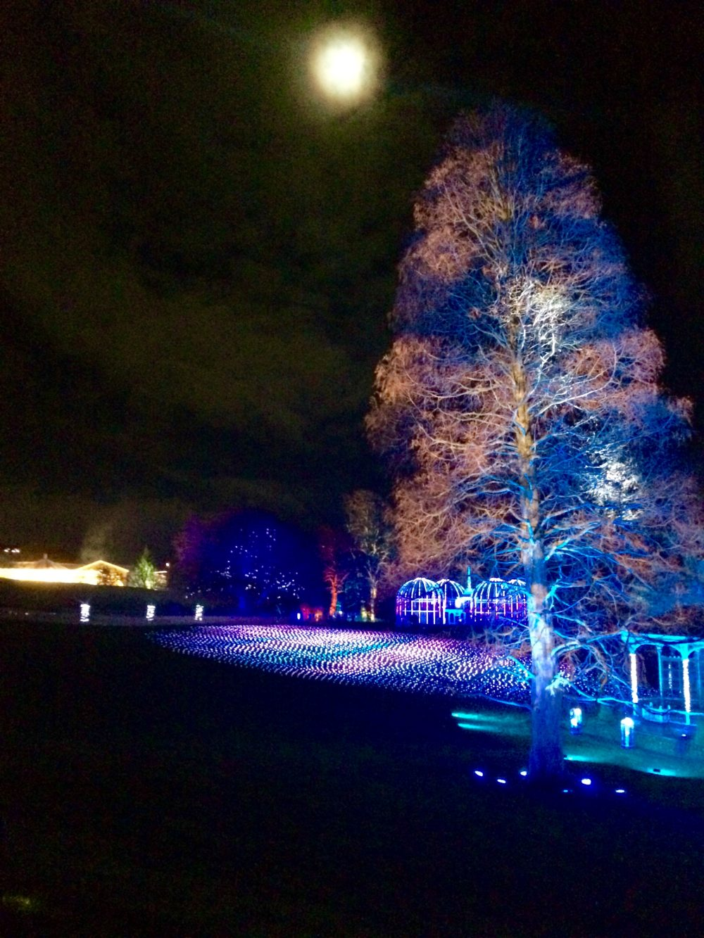 View of the Botanical Gardens lit up