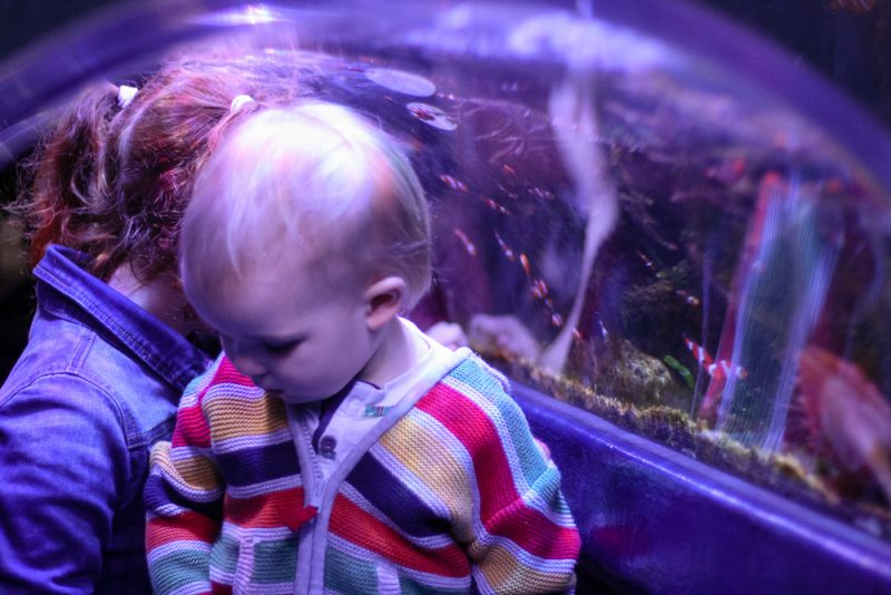 Loving exploring in the clown fish tunnel - Pickle was just the right height!