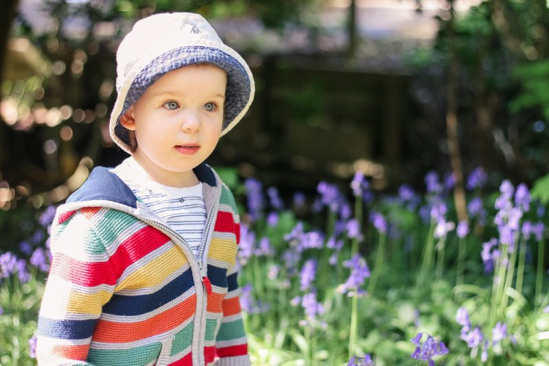 Pickle in his stripey jumper in the midst of a patch of bluebells on the way to Arrow Valley Lake, Redditch