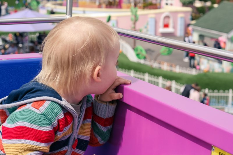 Pickle looking out over Peppa Pig World on the Queen's Flying Ride