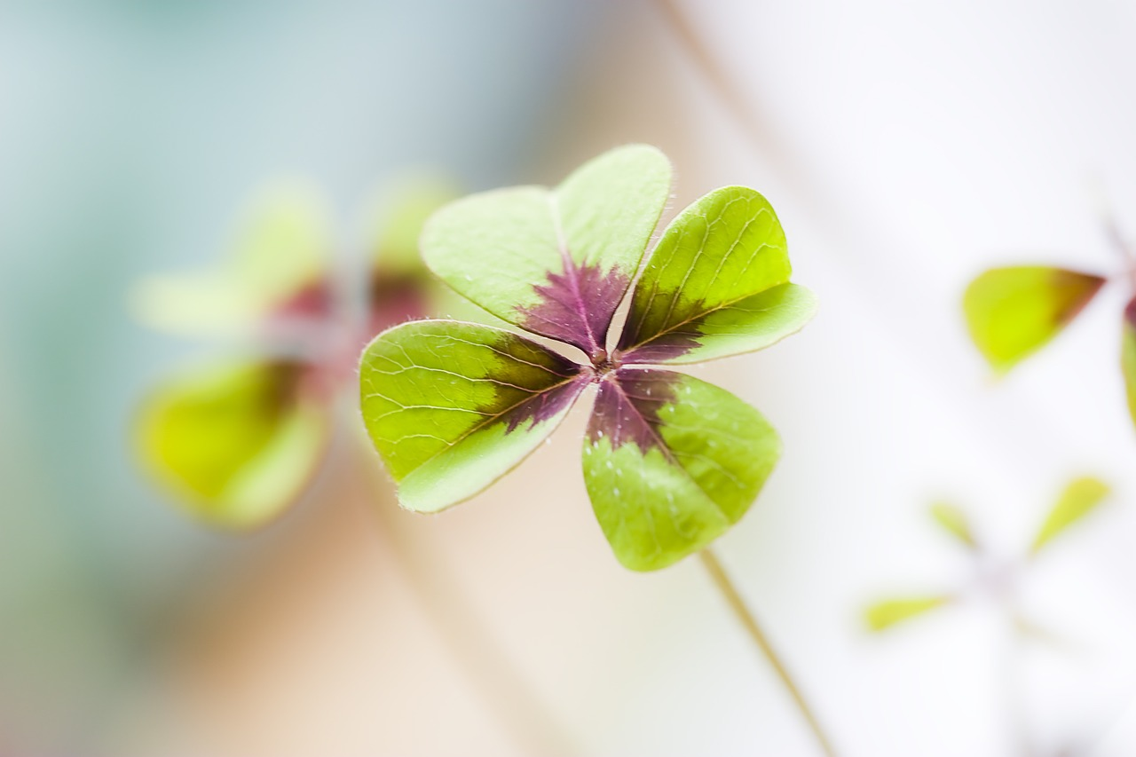 Four leaf clover is good luck
