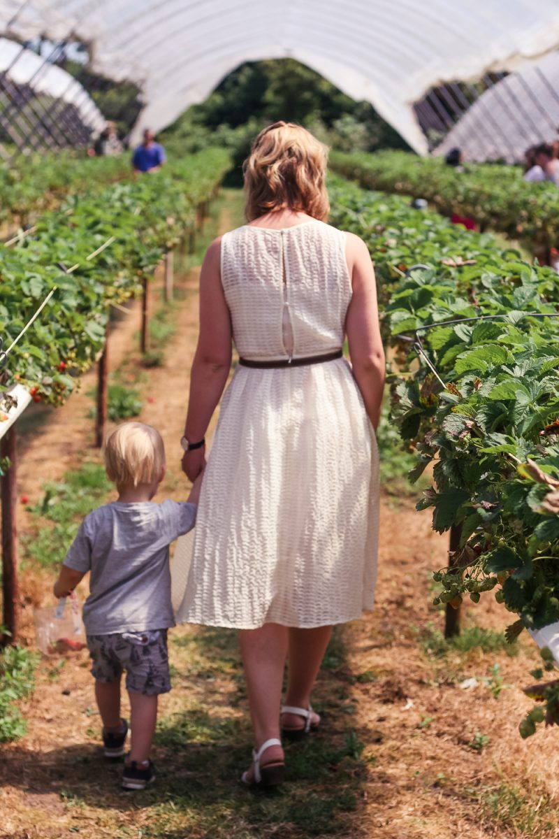 Walking hand in hand through the strawberry fields
