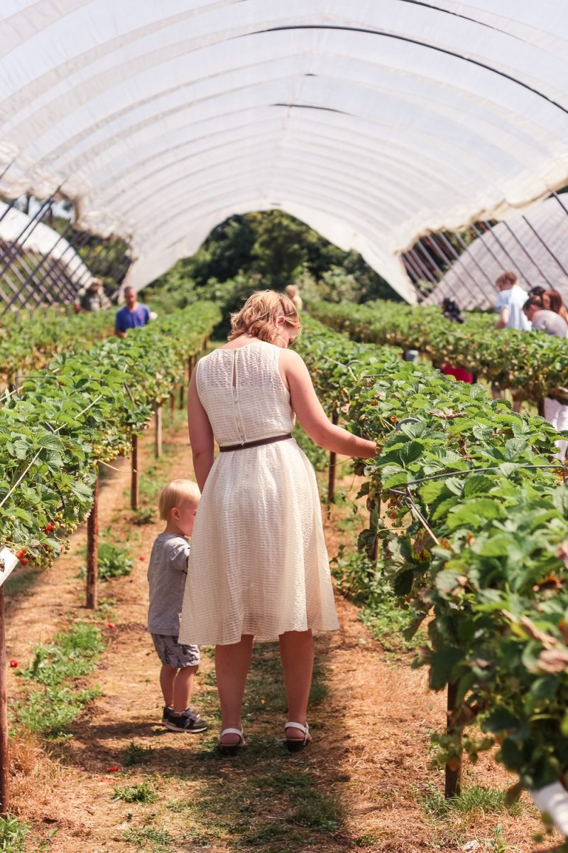The Strawberry field at Clive's Fruit Farm in an Elvi Clothing dress