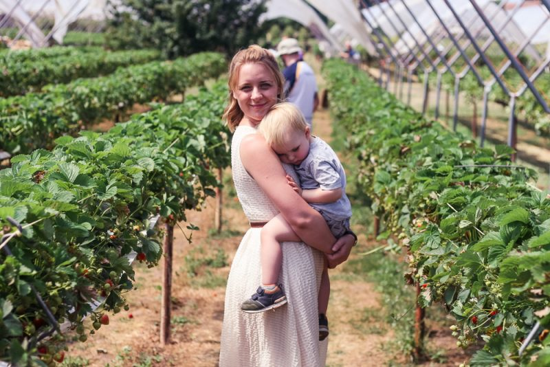 Pickle wanting to be carried, after a long time in the sun at the strawberry farm