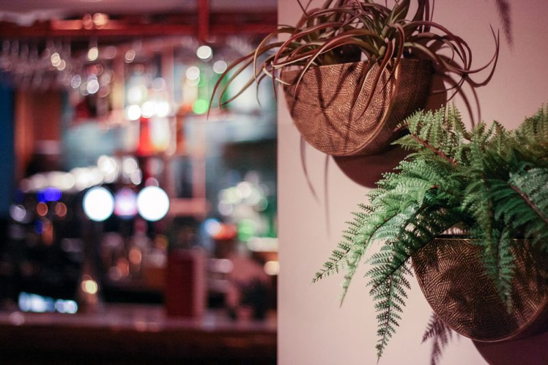 Love thee hanging plants at the new look Victoria Inn Barnt Green