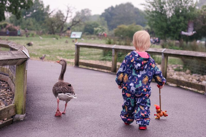 Having fun exploring at Slimbridge Wetlands