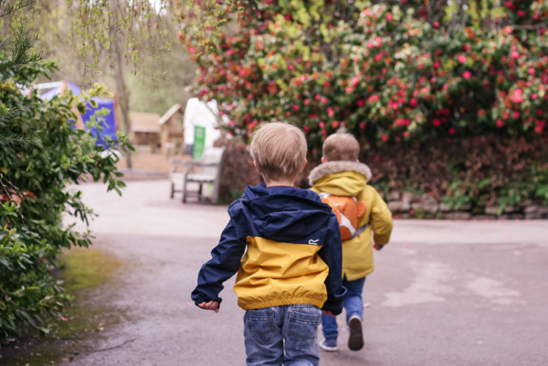 Pickle and his friend running through the Botanical Gardens