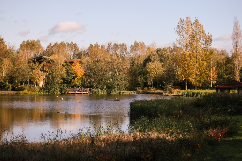 View of the lake at Conkers with autumnal trees