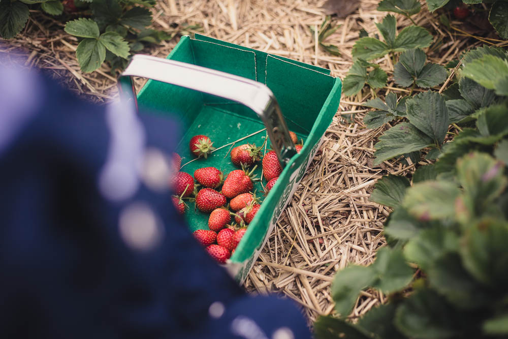 PYO Fruit at Scaddows Farm, Derbyshire