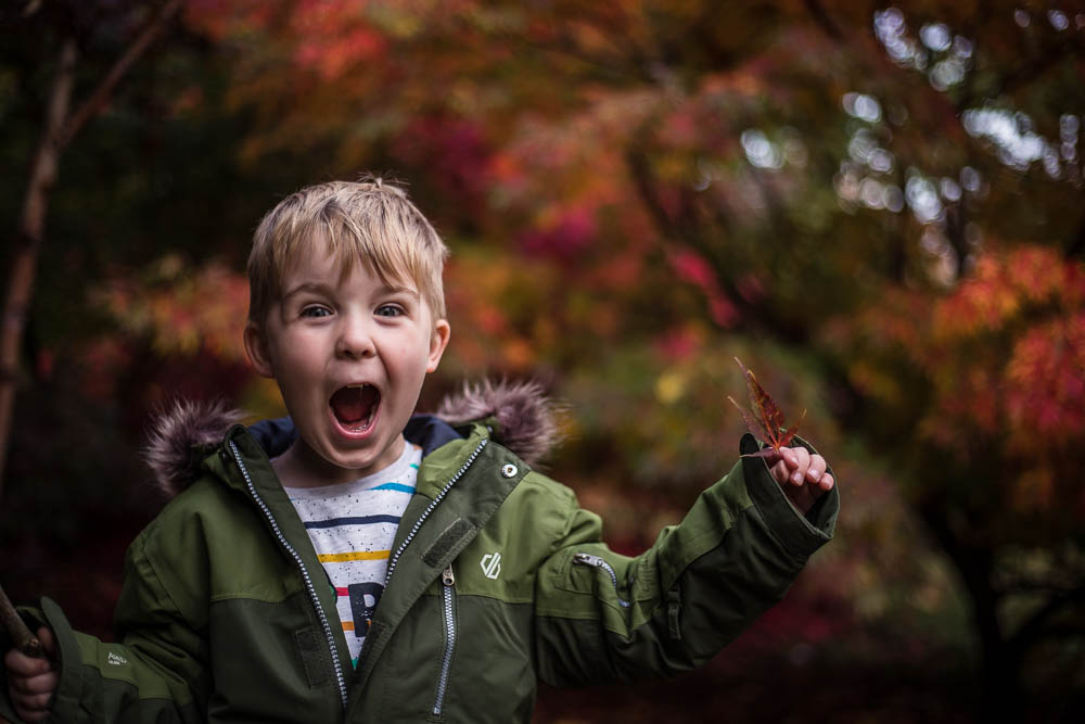 Happy Pickle with a big excited smile playing in the trees at Bodenham Arboretum