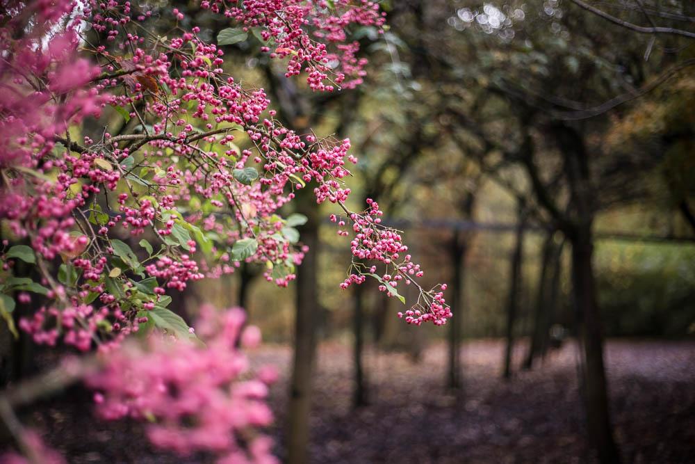 Pretty blossom at Bodenham Arboretum