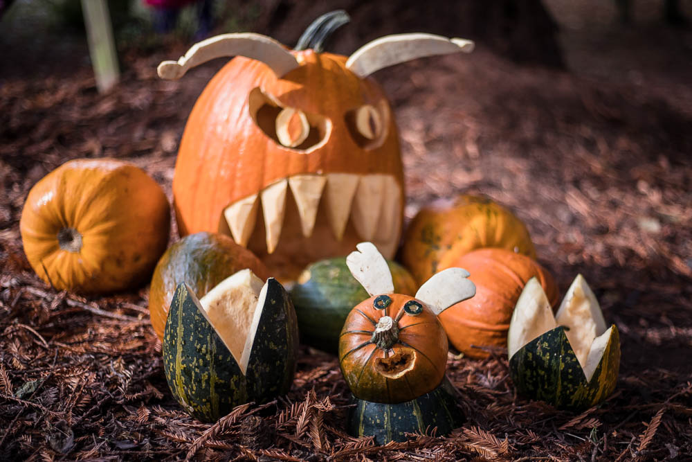 A series of Pumpkins including a little rabbit pumpkin and a scary bit toothed pumpkin with horns at Bodenham Arboretum