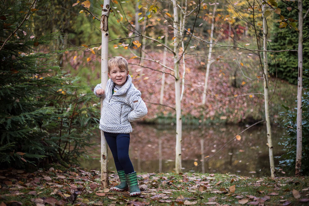 Pickle posing by a silver birch tree at Bodenham Arboretum