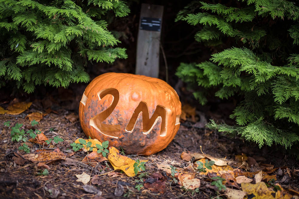 2m distance reminder on a carved pumpkin at Bodenham Arboretum