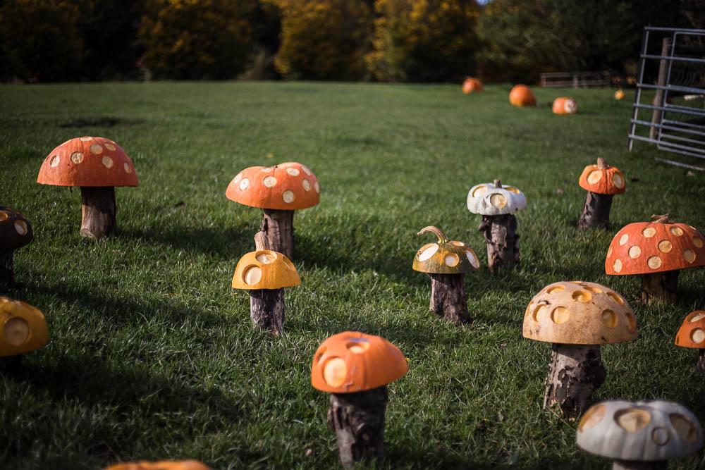 NHS Toadstool garden on the Pumpkin Trail at Bodenham Arboretum